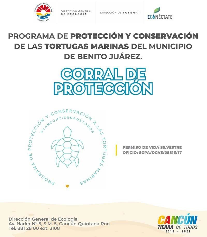 new-permit-sea-turtle-protection-corrals-cancun-2019