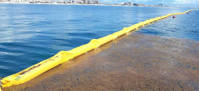 Possible impact of Seaweed Barriers for the Turtle Population