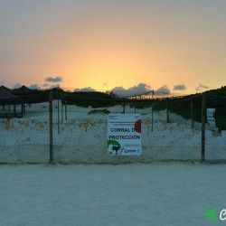 sea turtle protection area 10 07 2015