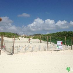 sea turtle protection area 24 06 2015