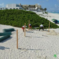 sea turtle protection area construccion 23 05 2016 5