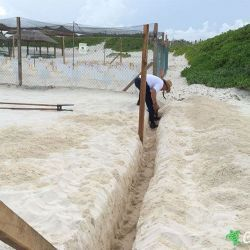 sea turtle protection area expansion 09 07 2015 2