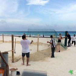 sea turtle protection area expansion 09 07 2015 3